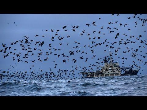 Birds of the Aleutian Islands