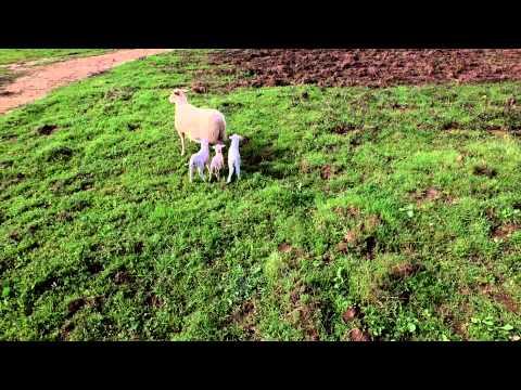 Drone Video over Noci Farm Sonoma Farm