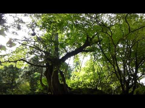 三平の家→馬場目川渓流を散策