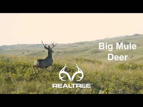The Chronicles: Hunting Mule Deer In Nebraska