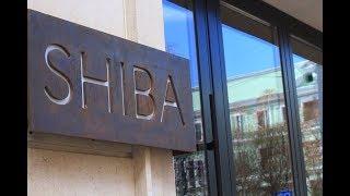 Capitalrent для Novikov Restaurant Group | SHIBA