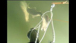 Подводная охота зимой на сома и судака на затопленной вырубке