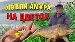 Ловил АМУРА на Цветок а поймал 7 кг КАРПА НА БЛЕСНУ Семейная рыбалка на платнике в Башкирии