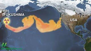 Fukušima a radioaktivita mořských plodů