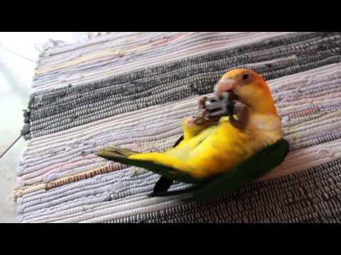 Il pappagallo e il suo fermaporte