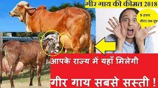 गीर गाय कहा मिलेगी   गीर गाय की जानकारी   गीर गाय की कीमत 2018