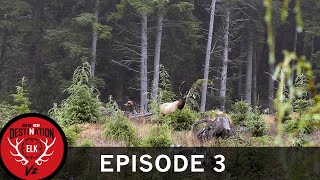 Calling a Roosevelt Herd Bull Away from the Cows (Destination Elk V2: Episode 3)