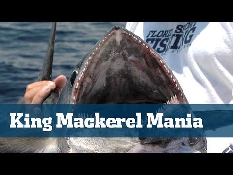 Florida Sport Fishing TV - Kingfish South Florida Tips Tactics Baits Rigs - Season 04 Episode 09