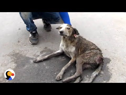 Stray Dog Who Couldn't Walk Runs So Fast Now | The Dodo