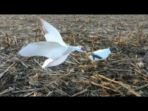 Flapping Snow Goose Decoy - Wing Beat Snow Power Flapper by SilloSocks