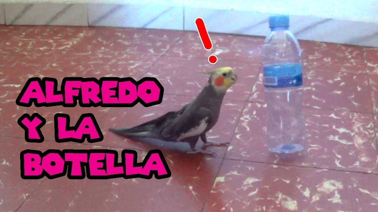 Alfredo y la botella
