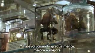 The Genius of Charles Darwin 3-Parte 3 (v.o.s.e.)