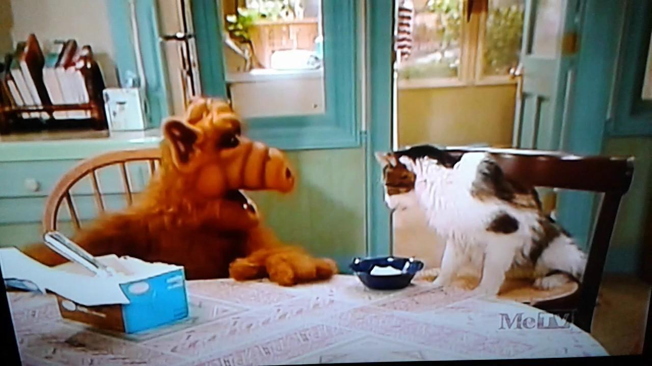 Alf Katzen
