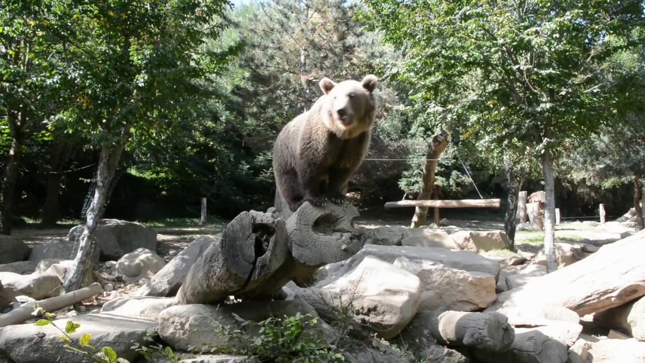 ours avec grosse queueamusant porno tube
