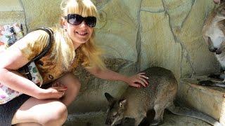 видео Лесные, горные, древесные кенгуру