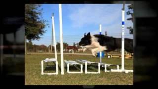 Dog Training Orlando - Dog Agility Fun