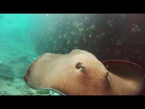 TRAVEL VLOG: Maldives Recap