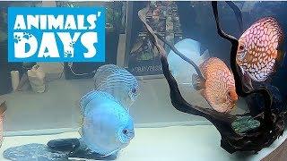 ANIMALS' DAYS 2019 | Dog Diving | Targi zoologiczne | zwierzęta egzotyczne