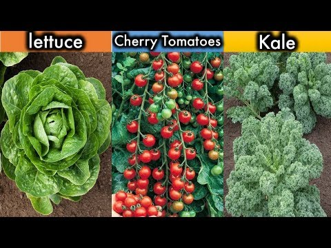 6 Vegetables That Grow Well In Shade. Perfect For Balcony Gardening