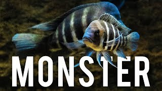 MONSTER Fish Room & Fish Store Tour