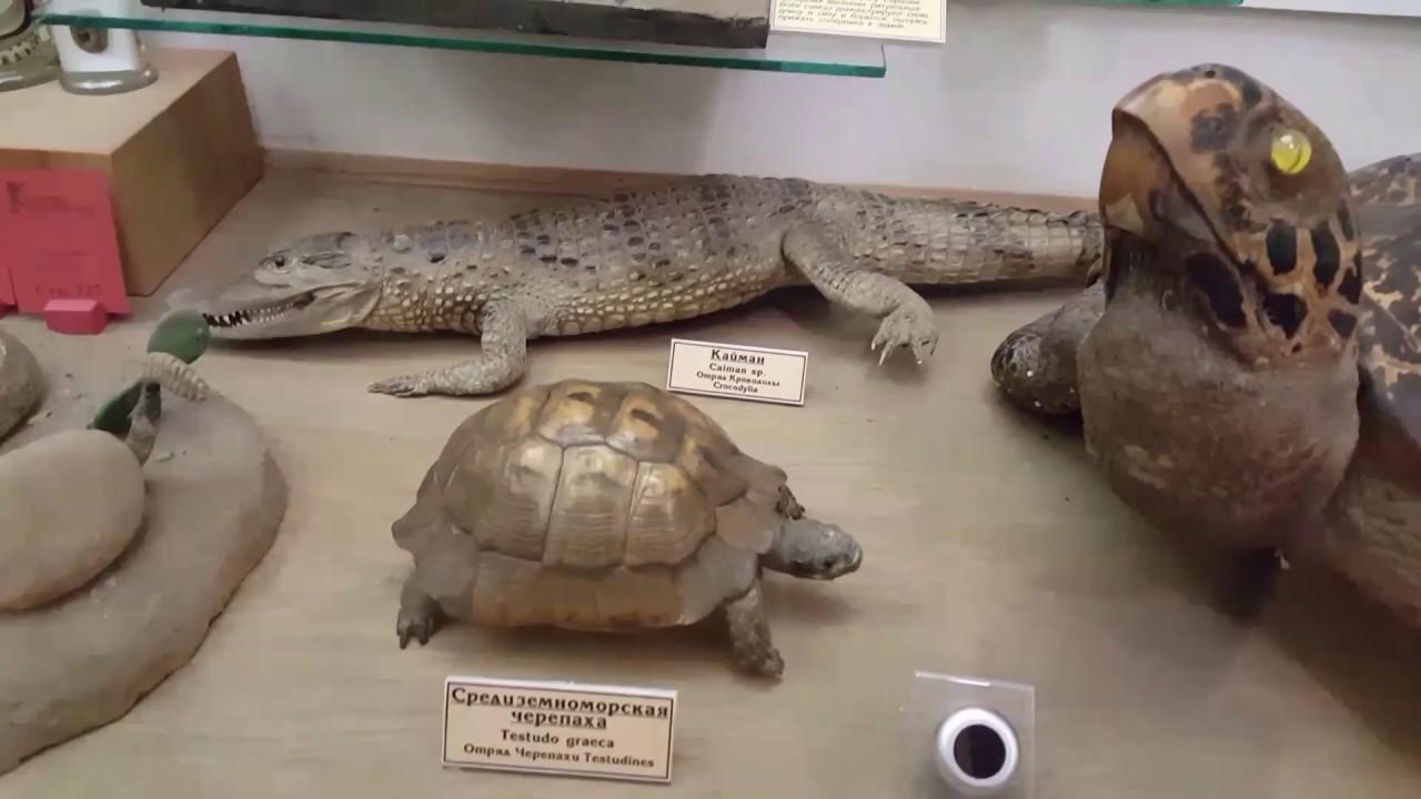 биологический музей паразиты в жизни человека