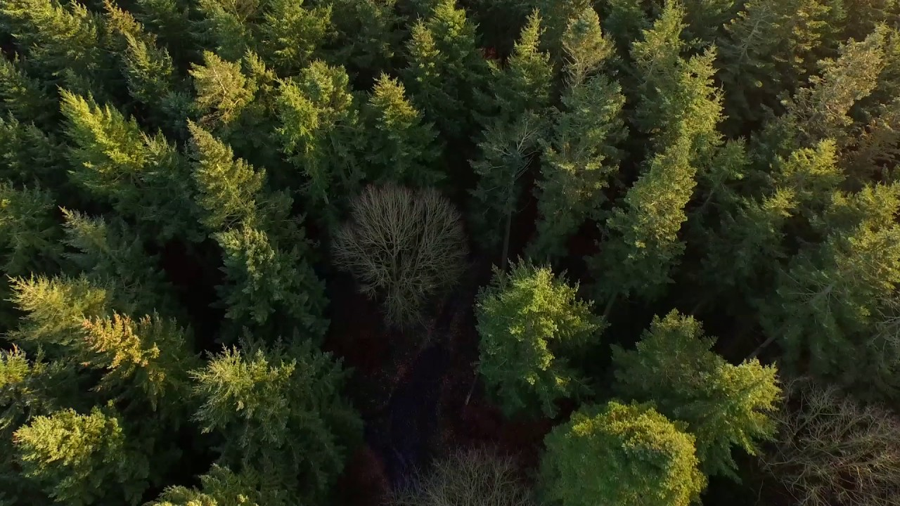 Forest video background for Leon landing page template - YouTube