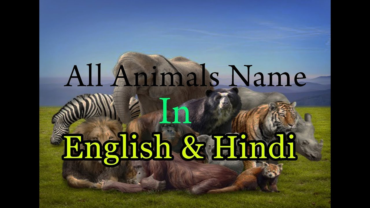 Wild Animals Name In Hindi And English With Photo Video