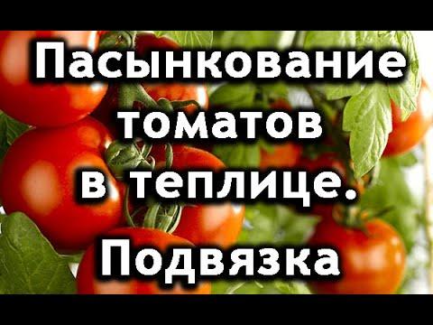 Пасынкование томатов в теплице. Подвязка томатов.