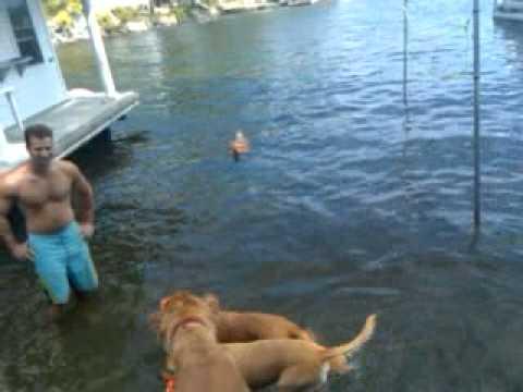 Pazzo swimming in lake New jersey