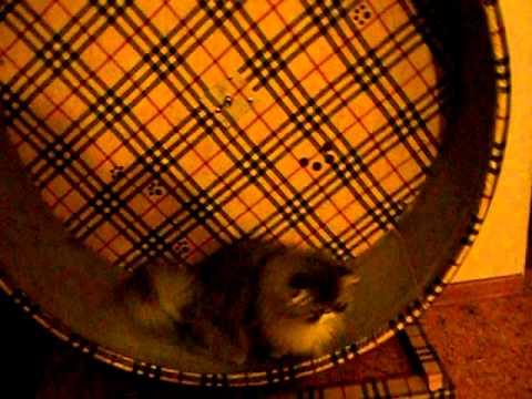 Беговое колесо для кошки своими руками
