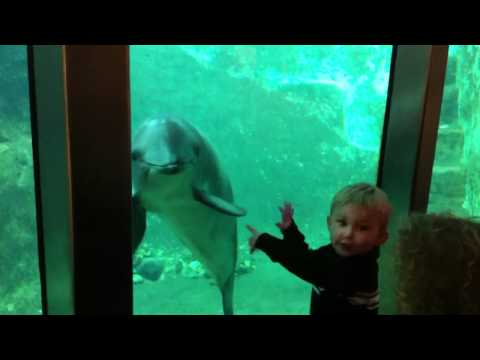 Baby Porpoise and Child Fascinated with each other.