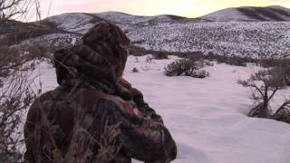 Coyote Hunting with Rabbit Distress