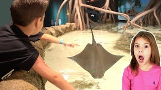 Kids Touch STINGRAYS at the AQUARIUM, SHARKS, Penguins + Gift Shop Toys