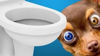 Понос у собаки(Здравствуйте, уважаемые друзья! Понос у собаки http://youtu.be/_srvS_jZ0zY – это довольно распространенное явление...., 2015-08-10T12:00:51.000Z)