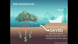 Flood Protection Benefits of Mangroves