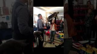 Шоу мейн кунов. Международная выставка кошек  Котомир-2016. Мейн куны питомника ApolloPride