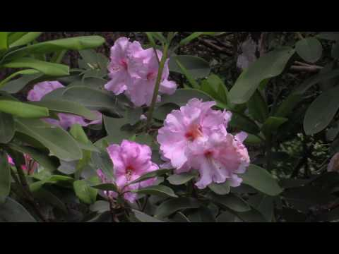 The Gardens of Antilla  - The Music of David Phillips