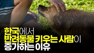 (※시청자질문) 한국에서 반려동물 키우는 사람이 증가하…