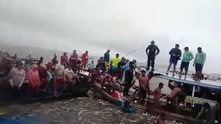 Maior pesca do peixe mapara na cidade de igarape mirí para