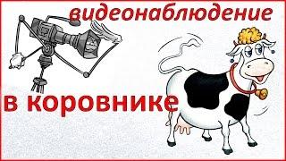 Видеонаблюдение за коровами. Как не прозевать отёл. Жизнь в деревне.(, 2016-05-06T18:42:49.000Z)