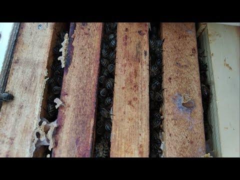 02.12.2018 г. Зимовка без утепления. Пчеловодство