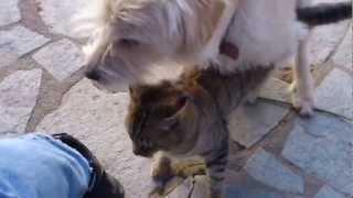 Download Video dog vs cat sex MP3 3GP MP4