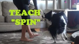 Spin Tutorial - How to teach any dog to spin on command