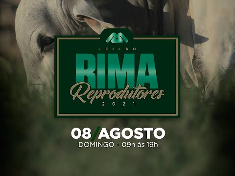 Lote 12   Rima FIV Pierro   RIMA A5766 Copy