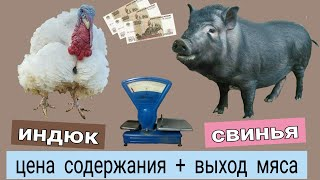 ДОМАШНЕЕ МЯСО \\ СЕБЕСТОИМОСТЬ свинина \\ индюшатина