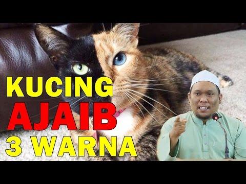Ustaz Auni Mohamad 2017 - Kisah Kucing Ajaib 3 Warna