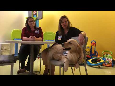 Meet Becky, the newest facility dog at Penn State Children's Hospital