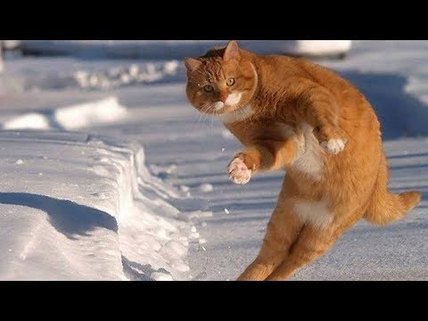 cats-reacting-to-the-first-snow-funny-compilation