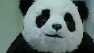 病院で点滴してたらパンダにチューブ引っこ抜かれた事件。