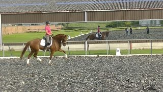 ***7 y old dressage mare KWPN by Cupido for sale